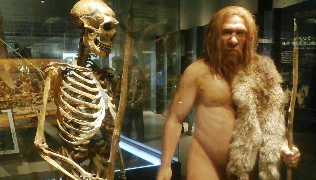 En neandertal-rekonstruksjon i Tokyo. (Bilde: Photaro/CC BY-SA 3.0)