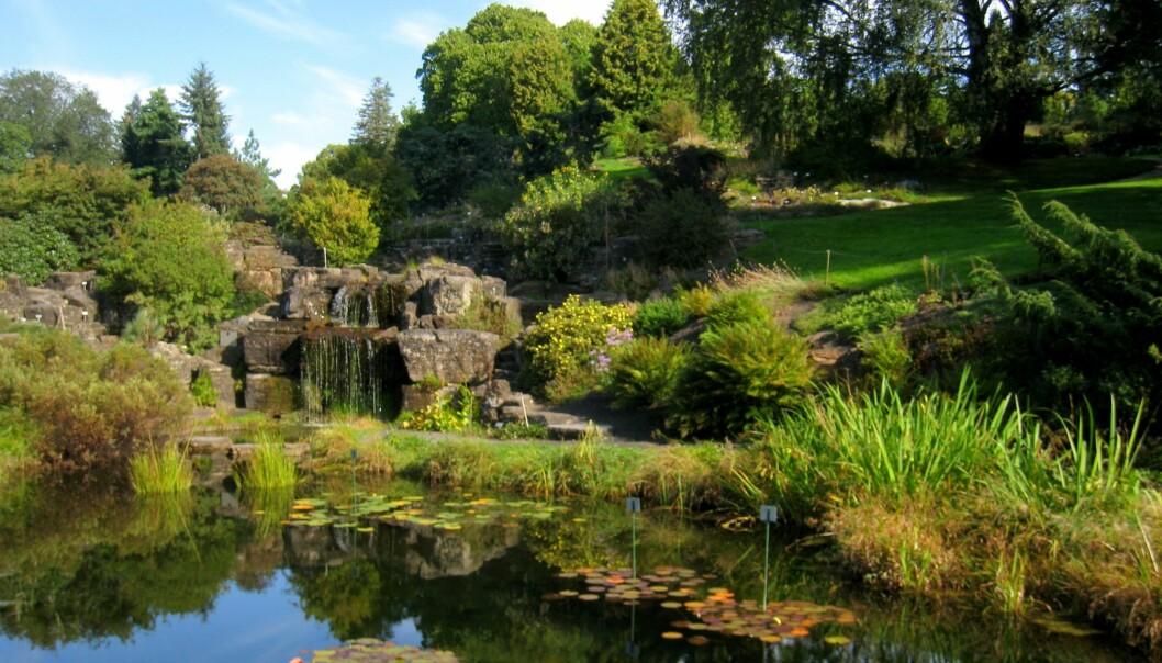 I Botanisk hage i Oslo dyrkes 5500 plantearter i veksthus og på friland. (Foto: Daderot, Wikimedia Commons)