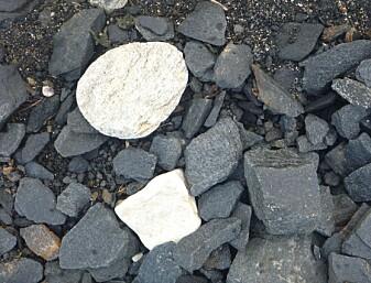 Så forskjellig kan stein være – løse blokker på stranda reflekterer ofte geologien i berget – på Røykneset på Hinnøya kartla vi både lyse kalksteiner og mørke amfibolitter (Foto: Ane K. Engvik)