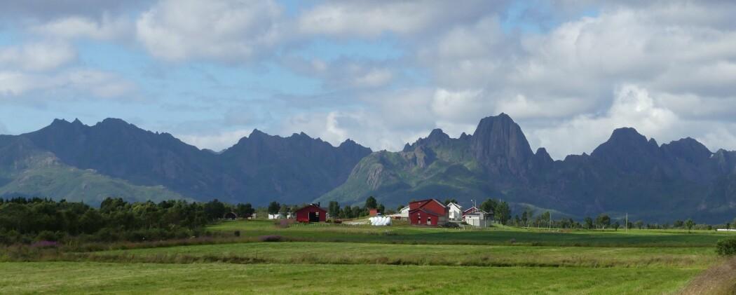 Taggete tinderekker - topografien byr på utfordringer under kartleggingen i Vesterålen. (Foto: Ane K. Engvik)