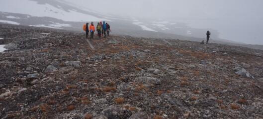 Tundraen blir varmere og plantene blir høyere