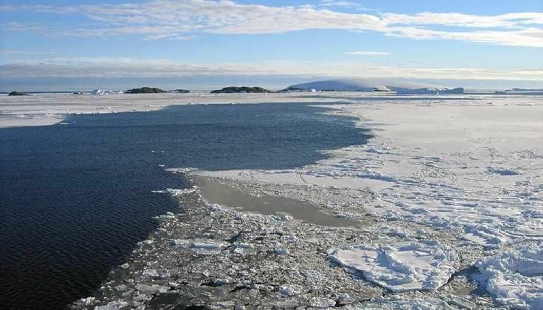 En oase i Arktis sikret livet under siste istid