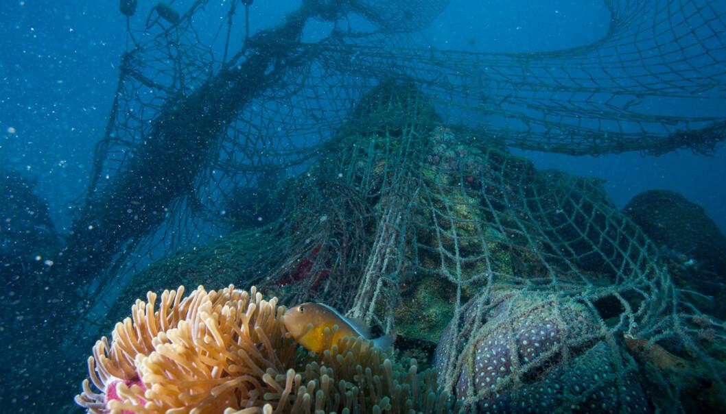 Gamle fiskegarn utgjør et betydelig miljøproblem. (Foto: Shutterstock / NTB scanpix)