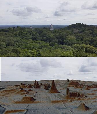 Bildet viser et område i Tikal, både som foto og som lidar-bilde. (Bilde: Luke Auld Thomas/Marcello A Canuto/PACUNAM))