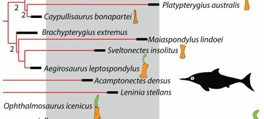 Hva er fylogeni?