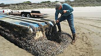 Hundrevis av arter haiket over Stillehavet etter tsunami