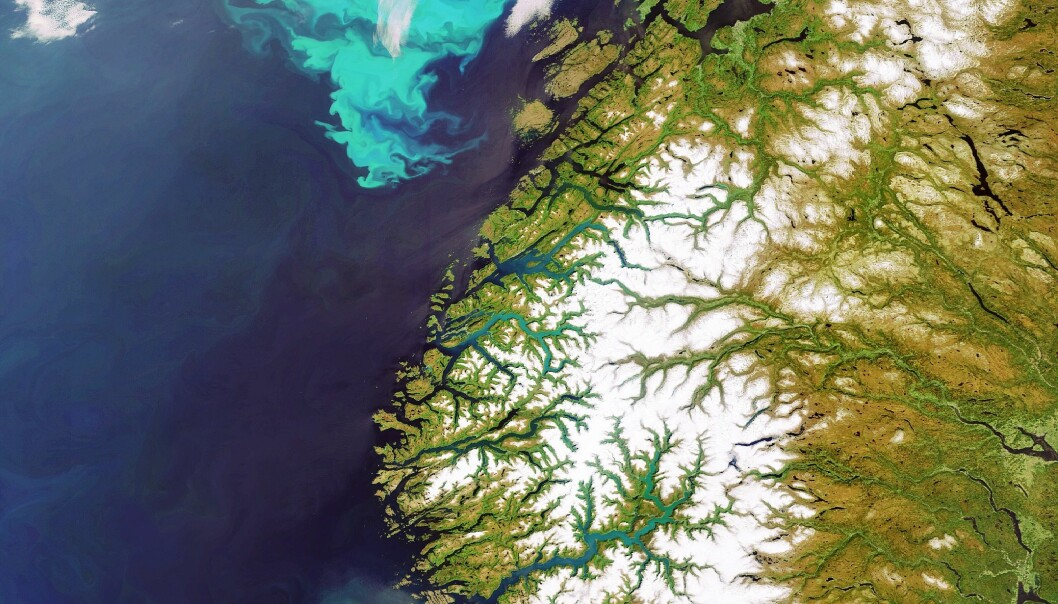At plankton er selve grunnlaget for næringspyramiden i havet, er godt kjent. Nå viser det seg at oppblomstringen av planteplankton til havs også kan påvirke forekomsten av mikronæringsstoffer i næringskjeder på land. (Foto: ESA)