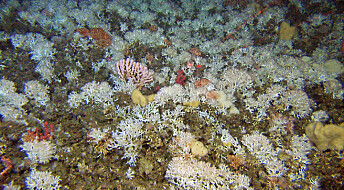 Nett-TV: Raserte korallrev kan vokse opp igjen