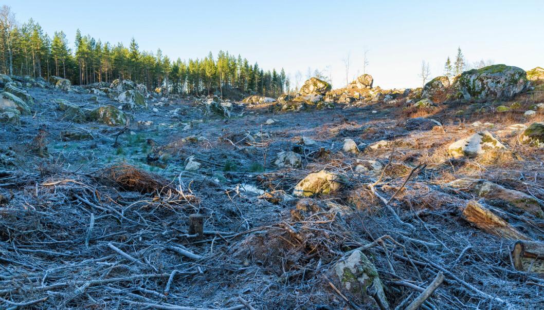 Avskoging kan føre til at deler av Europa blir litt kaldere. (Illustrasjonsfoto: Imfoto / Shutterstock / NTB scanpix)