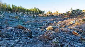 Europa blir kaldere om trærne forsvinner