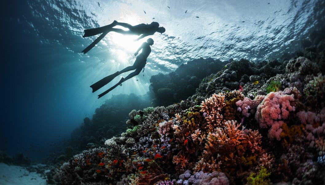 - Allerede på ti meters dyp er trykket økt til to atmosfærer, dobbelt så mye som ved overflaten. For hver tiende meter vi beveger oss nedover, vil trykket øke med ytterligere én atmosfære, skriver Erik Sveberg Dietrichs. (Foto: Mikhail Dudarev / Shutterstock / NTB scanpix)
