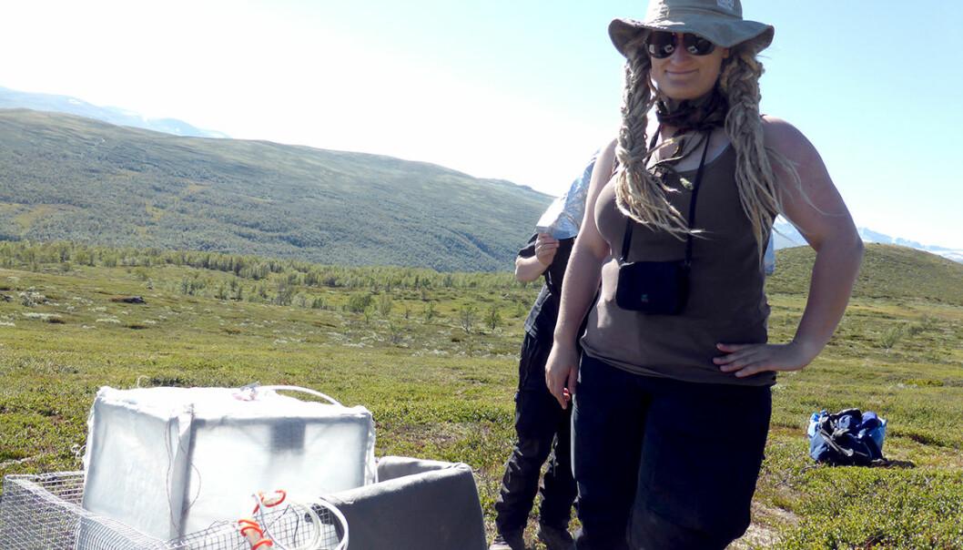 Mia Vedel Sørensen tok nylig doktorgraden sin på hvordan plantene i fjellet påvirkes av beiting. (Foto: Diana Eckert)
