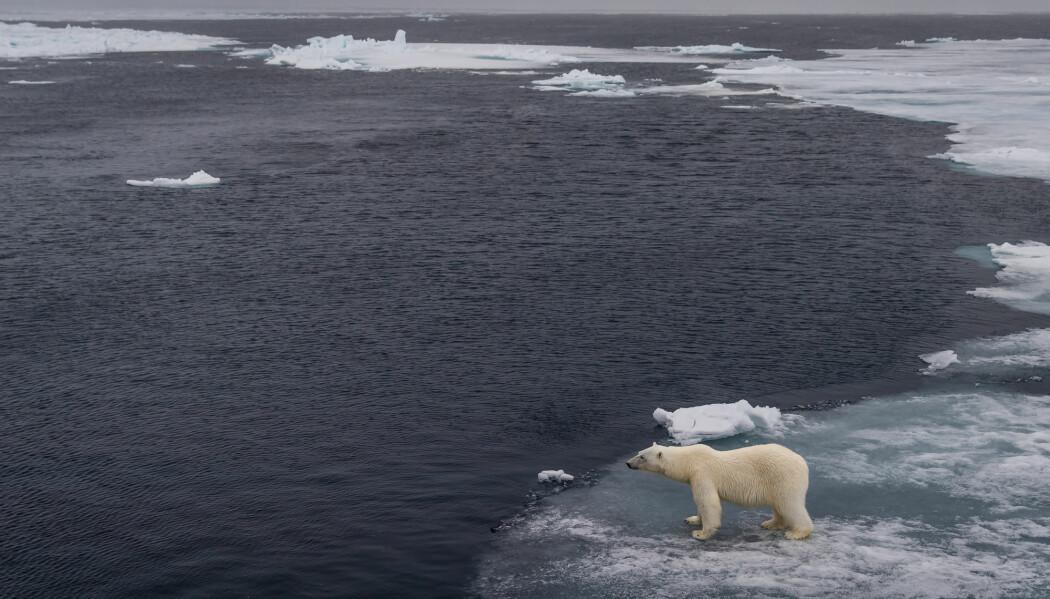 - Det Atlantiske vannet bringer med seg enorme mengder varme inn i Polhavet. Denne varmen er med på å smelte sjøisen i nærheten av Svalbard, og det forskes i dag på hvordan det Atlantiske vannet vil påvirke sjøisen i Polhavet i fremtiden, skriver Helene R. Langehaug. (Foto: Shutterstock / NTB Scanpix)