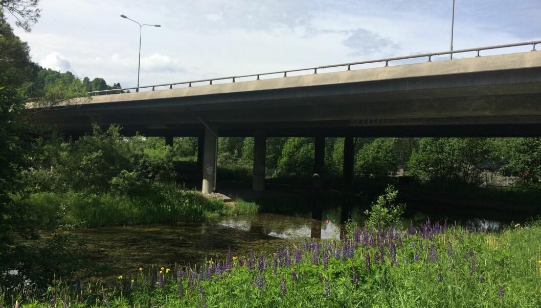 De fleste steder renner vann fra bilveier rett ut i naturen. Men langs de nye, større hovedveiene er det ofte bygd sedimentasjonsdammer. Her er et basseng som ligger på Skullerud i Oslo. (Foto: NIVA)