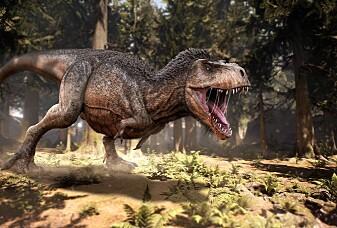 – Inni klumpen er det en ekte dinosaur-fjær