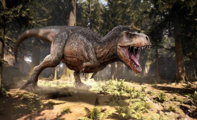 Hadde Tyrannosaurus rex fjær? Antakelig ikke, mener Jørn Hurum (Kunstverk: Herschel Hoffmeyer / Shutterstock / NTB scanpix)