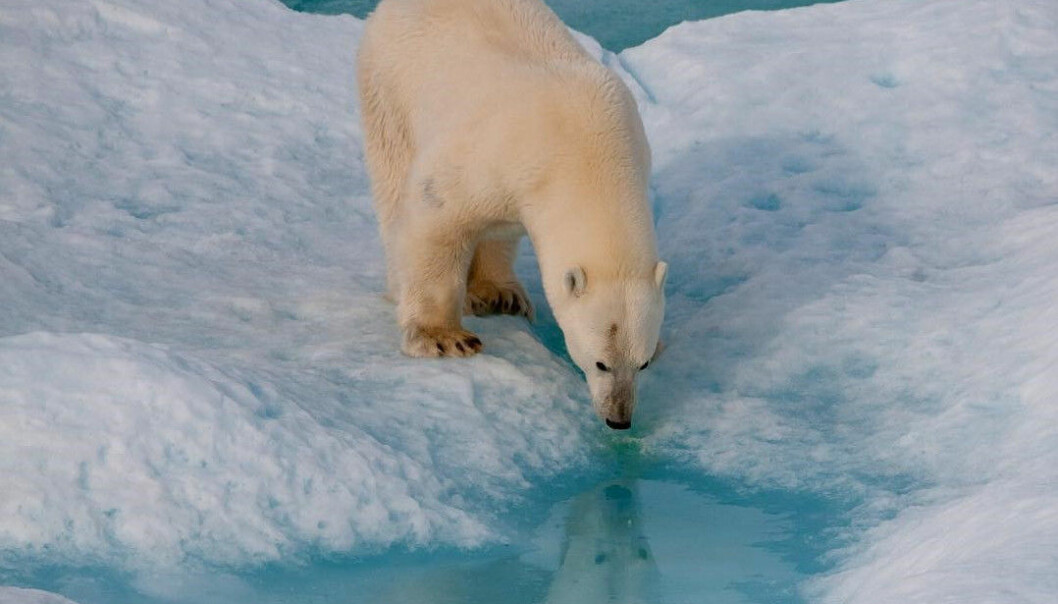 Klimaendringer handler ikke bare om økt temperatur og smeltende is. (Foto: Matthew Messina)