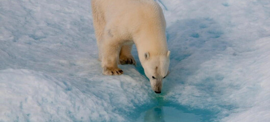 Klimaendringene forskyver samspillet i naturen