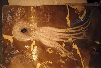Slik pusser du opp en 100 millioner gammel blekksprut