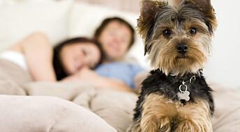 Sov like godt med hunden på soverommet