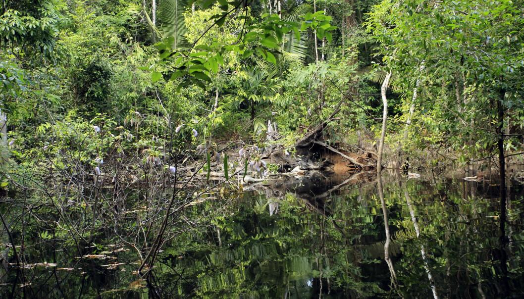 Overdreven jakt og fiske kan være en trussel mot Amazonas. (Illustrasjonsfoto: Colourbox)