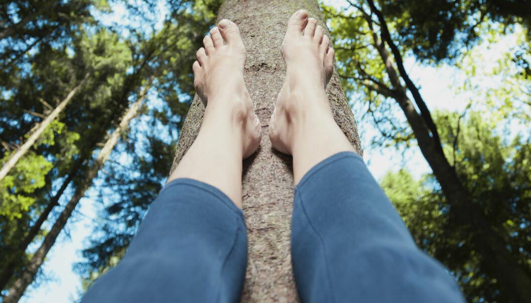 Norges dype skoger rommer uante verdier. Nå er forskere i full gang med å utforske hvordan trærne kan lage nye kroppsdeler. (Illustrasjonsfoto: Shutterstock / NTB Scanpix)