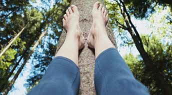 Trær kan bli byggeklosser for nye kroppsdeler
