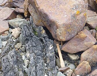 Mellom de vanlige gneis-bergartene finner vi svarte skiferlag rike på grafitt. (Foto: Ane K. Engvik)