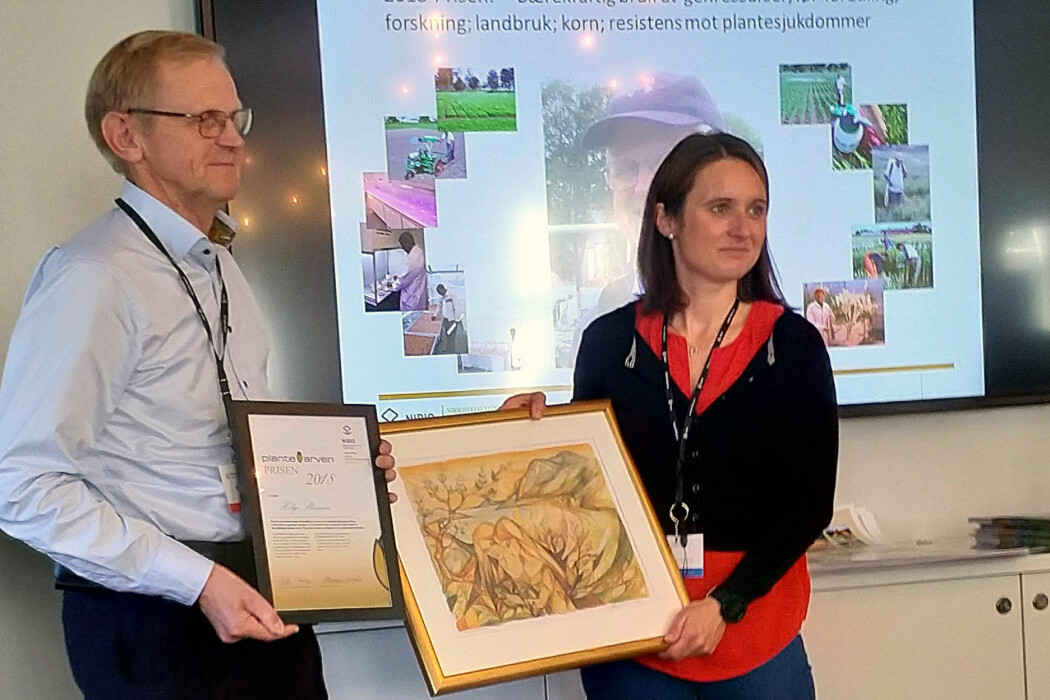 Statssekretær Hanne Maren Blåfjelldal overrakte Plantearveprisen for 2018 til forsker Helge Skinnes under et fagseminar om genressurser på Tøyen Hovedgård. (Foto: NMBU)