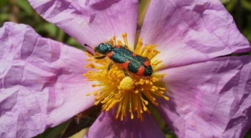 Blomsterfarge henger sammen med duft