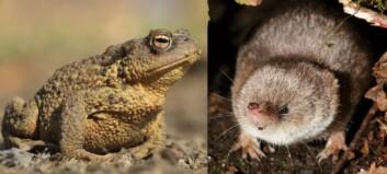 Hvorfor lever noen dyr lenge og andre kort?