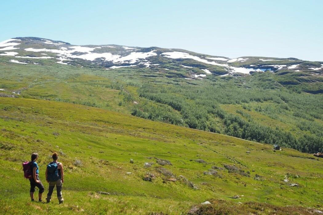 Slik skogen kryper oppover i fjellet så forskyver seg temperaturgrensen til plantearter flest oppover. (I bildet: Vigdis Vandvik & Dagmar Egelkraut fra UiB. (Foto: Ragnhild Gya)