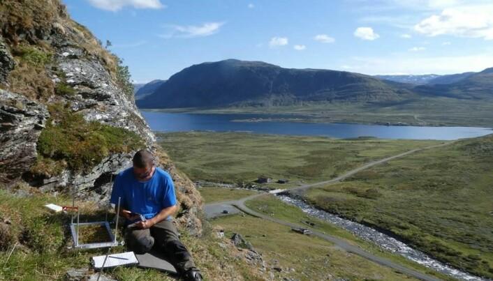 Vi overvåker vegetasjonen i til sammen 160 slike ruter på 35x25 cm (i bildet: Joachim Töpper) (Foto: Siri Lie Olsen)