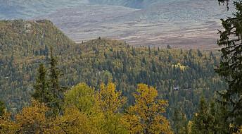 Ekstremvær kan påvirke hvor mye karbon som lagres i skogen