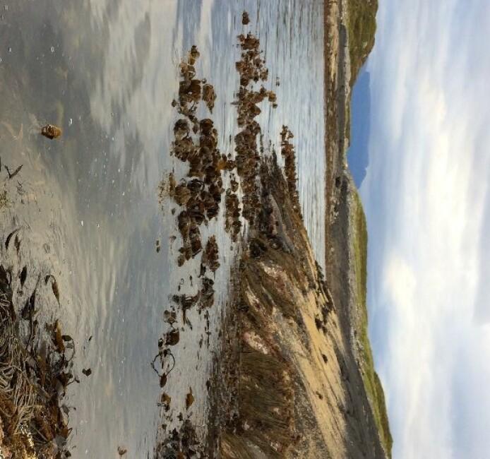 Er vi i ferd med å miste tareskogen i indre fjordsystemer på Møre?