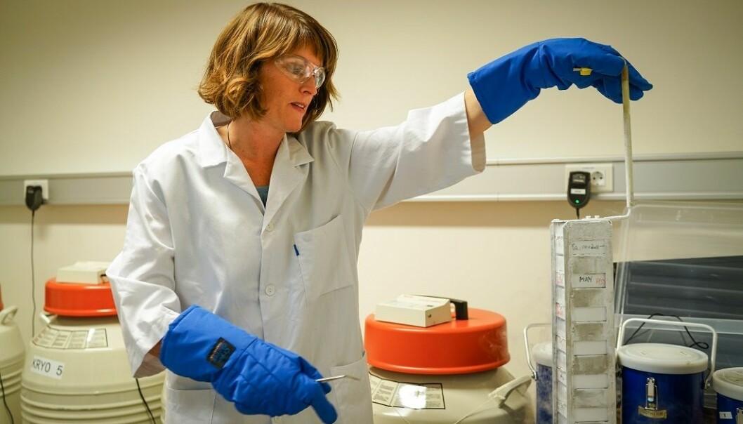 May-Britt Tessem og kollegene hennes jakter på stoffer i kroppen som både kan avsløre prostatakreft og vise hvor aggressiv kreften er. (Foto: Geir Otto Johansen / St.Olav)