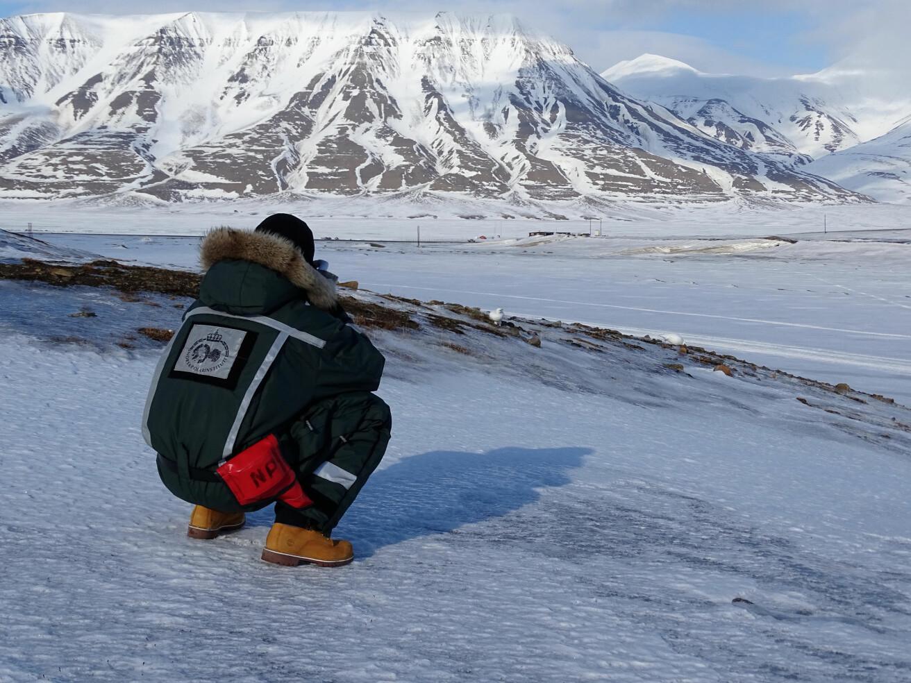 Nærkontakt med svalbardryper er ganske vanlig på tundraen. Men man skal likevel holde litt avstand og ikke skremme fuglene. Hvis en rype på reir blir skremt, kan rypa forlate reiret og eggerøvere kan være raskt på pletten. (Foto: Eva Fuglei / Norsk Polarinstitutt)