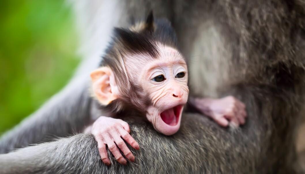 - Ikke medfødt at babyer kan kjenne igjen ansikter