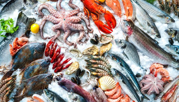 Hummer er dyrt og lite klimavennlig, mens muslinger er miljøvennlig. Se i faktaboksen hvor stor forskjell det er. (Foto: Alexander Raths / Shutterstock / NTB scanpix)