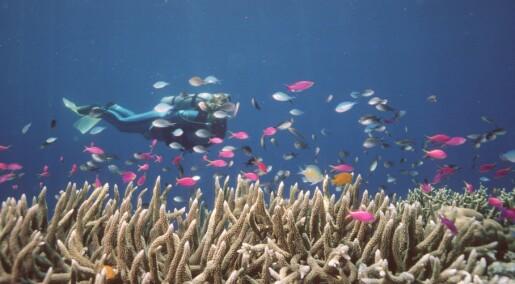 Kan vi løse korallkrisen ved å dyrke korallene selv?