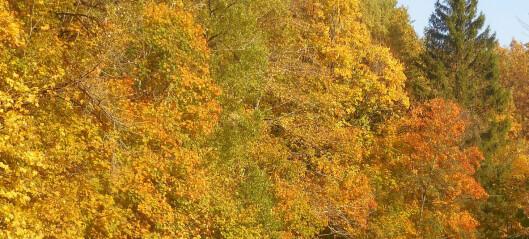 «Pappa, hvorfor blir bladene gule om høsten?»