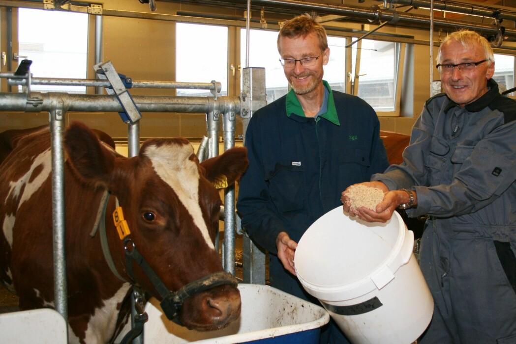 Egil Prestløkken og Odd Magne Harstad, begge forskere ved NMBU, fikk ideen om å prøve ut sagflis som fôr til ku. (Foto: Janne Karin Brodin)