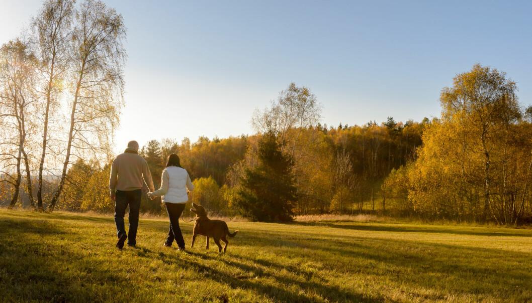 Mosjon hjelper mot mye - man kanskje ikke demens.  (Illustrasjonsfoto: CandyBox Images / Shutterstock / NTB scanpix)