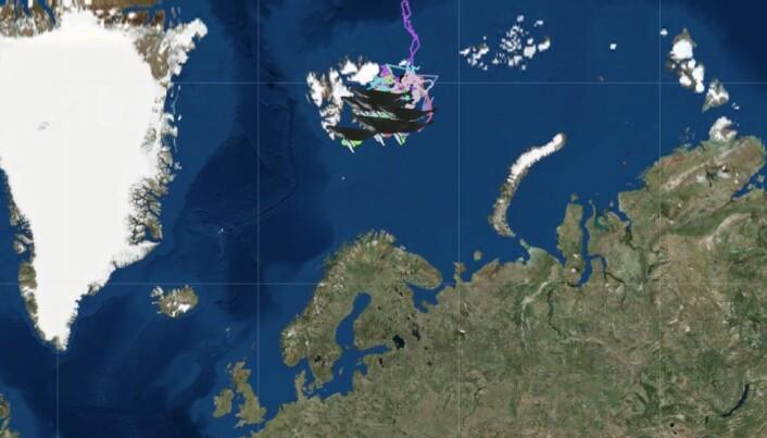 Kartet viser hvor hvalene befinner seg på sin ferd mot tropiske farvann. (Skjermdump fra whaletracking2018.uit.no)