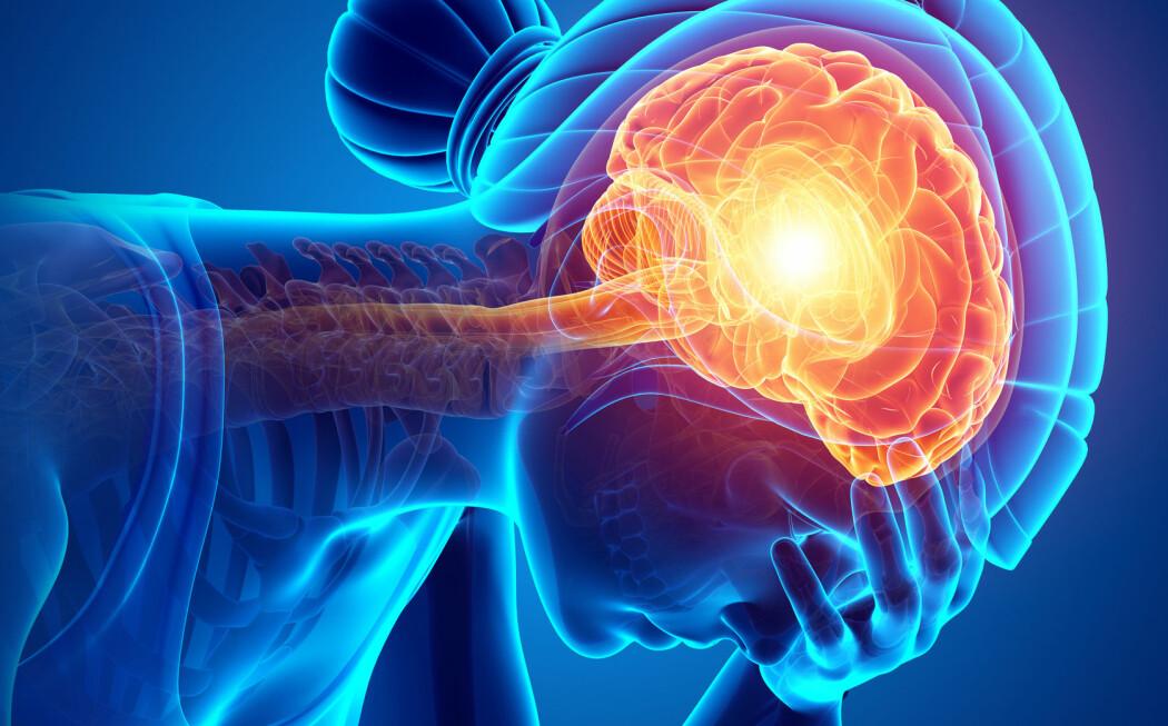 Hjernen er omgitt av ryggmargsvæske som går ned i ryggraden. Væsken er det tetteste vi kommer på å få et bilde av hvordan hjernen har det. (Foto: S K Chavan / Shutterstock / NTB scanpix)