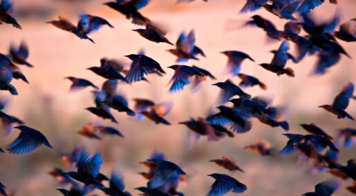 Hvordan begynte fuglene å fly?
