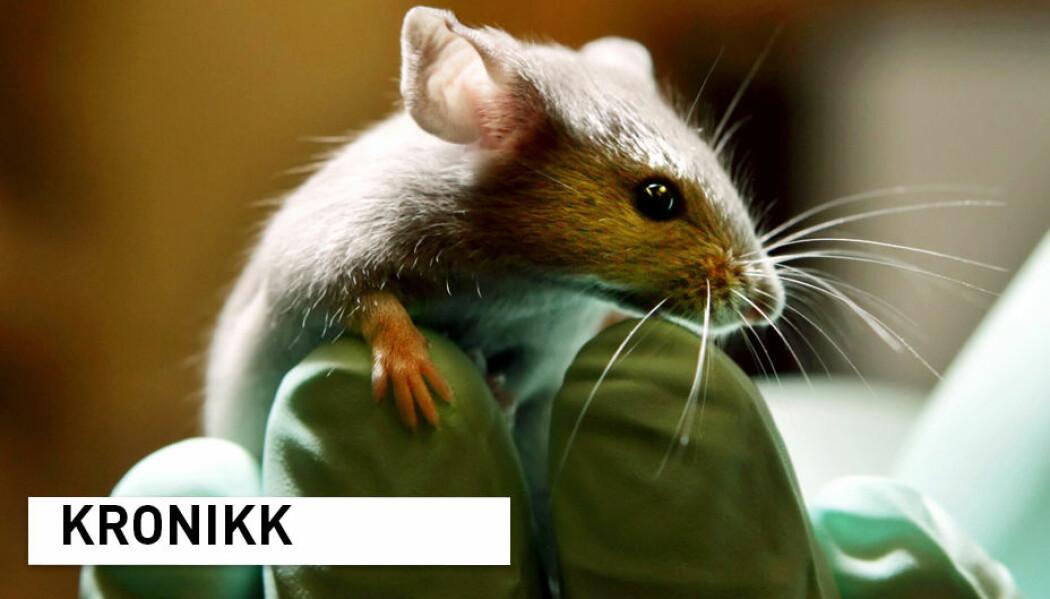 - Det er fortsatt en utbredt oppfatning at bruken av dyreforsøk i enkelte tilfeller kan være nødvendig for å frembringe forbedringer for mennesker, dyr eller miljø. Så hvordan kan vi sørge for at slik forskning gjennomføres på best mulig måte? spør kronikkforfatterne.