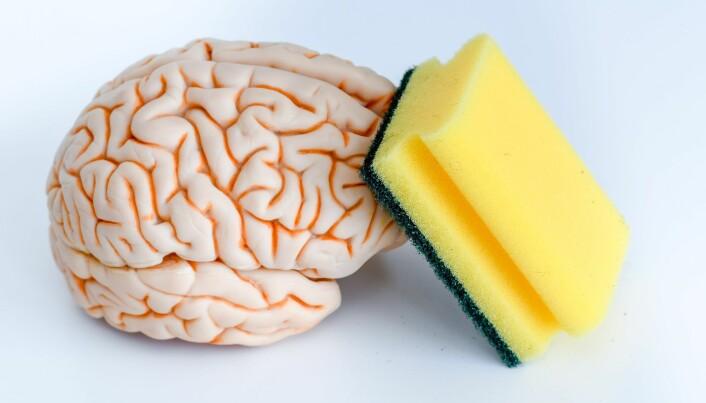Vi har også en kroppsvæske som flyter rundt hjernen. (Illustrasjon: rozbeh / Shutterstock / NTB scanpix).