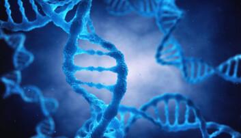 Forskerne mener resultatene deres kan brukes i en test for å forutsi risikoen for lårhalsbrudd. (Foto: Shutterstock / NTB scanpix)
