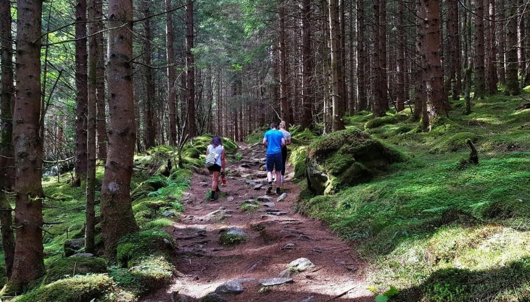 Det å komme seg ut i skog og mark har store helsefordeler, og økt fysisk aktivitet i befolkningen kan spare samfunnet for milliarder av velferdskroner. Likevel legger ikke kommunene til rette for det kortreiste friluftslivet. (Foto: Tove Rømo Grande/NMBU)